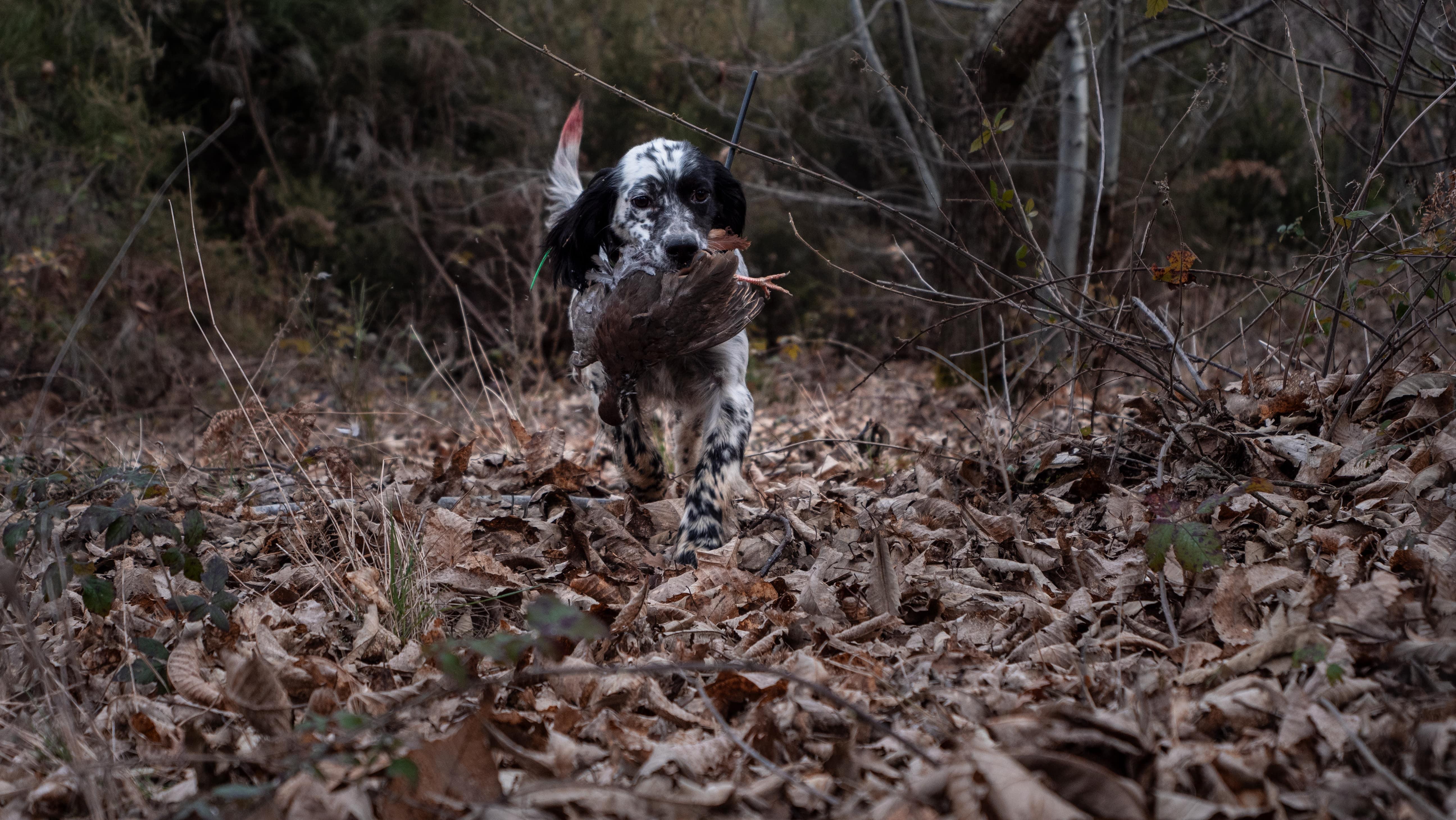 caccia stanziali riserva di caccia toscana