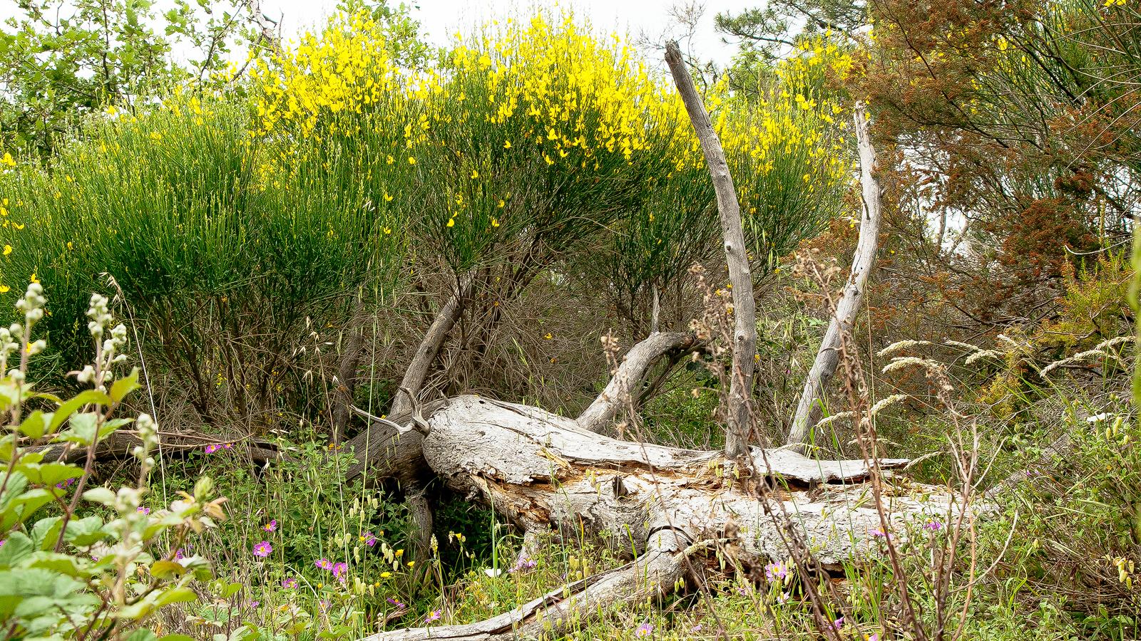 a walk in tuscan nature hunting reserve le corniole